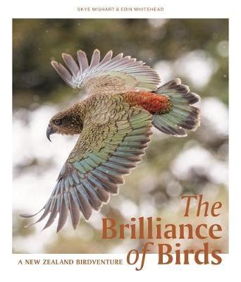 The Brilliance of Birds - pr_1699666